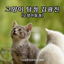 고양이 탐정 김광진 네이버 모두 홈페이지 제작사례